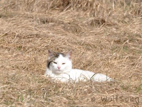 Still at rest, but kinda grumpy we woke him.